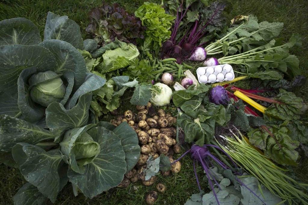 Lækre grøntsager og æg