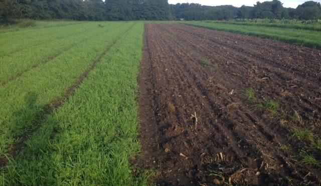 Video om jordfrugtbarhed og efterafgrøder